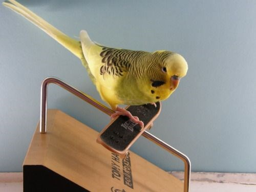 cool skateboards birds photos Memes - 5962757