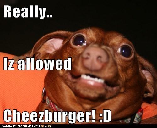 Cheezburger Image 5962879232