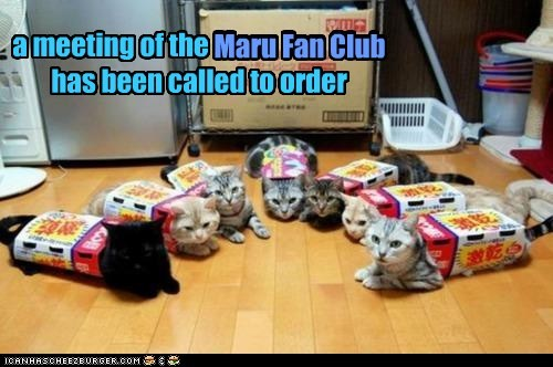 a meeting of the Maru Fan Club has been called to order Maru Fan Club