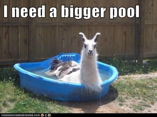 backyard pool,best of the week,bigger,Hall of Fame,llama,llamas,need,plastic,pool,pools,size,wtf