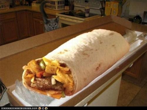 Cheezburger Image 5963503360