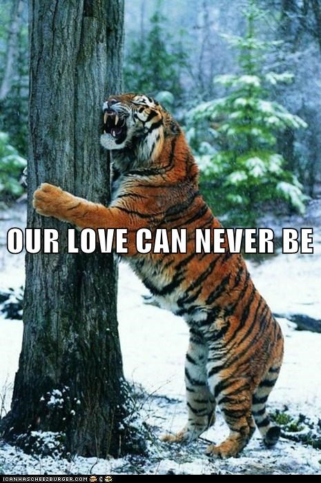 crying forbidden love hug love Sad tiger tree - 5963632896