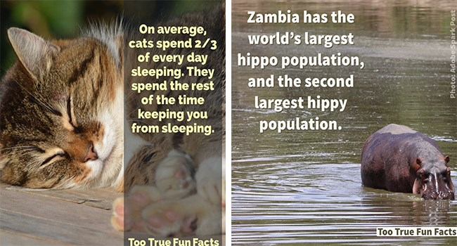fun animal facts and trivia