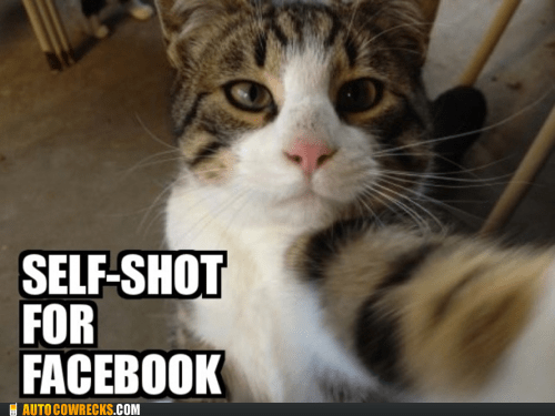 cat facebook self poortraits self shot - 5965294848