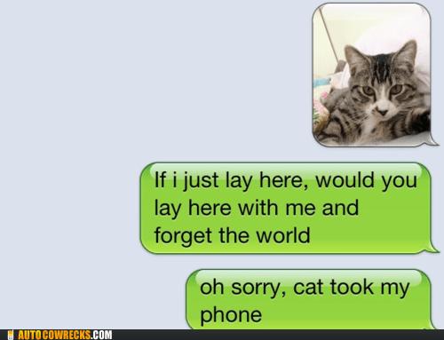 AutocoWrecks cat lyrics Music - 5965323008