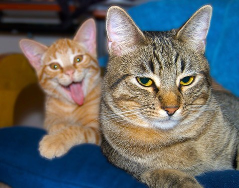 Caturday kitteh photobomb - 5965370624