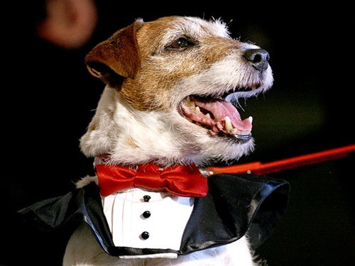 celeb,jimmy kimmel,omar von muller,President Obama,the artist,uggie,White House Correspondents' Association's dinner
