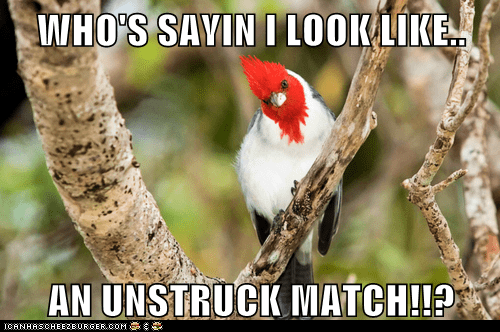 bird,head,match,red,woodpecker