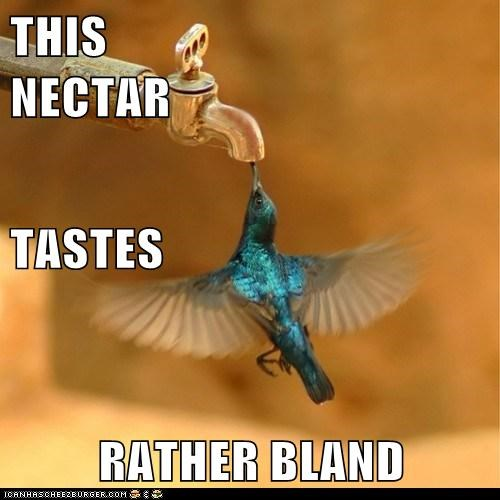 bland hummingbird nectar spout tap taste water - 5966700288