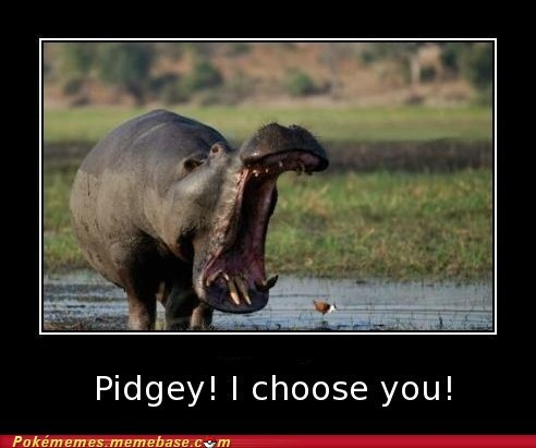 bird gust hippo i choose you Memes pidgey trainers - 5966887936
