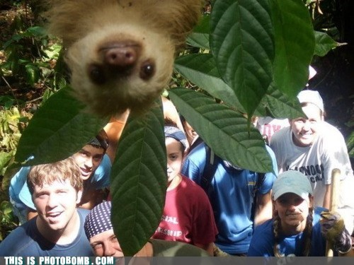 animal,Animal Bomb,best of week,funny,ohai,sloth
