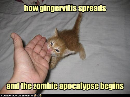 apocalypse,best of the week,bite,Cats,finger,ginger,hand,hands,lolcats,puns,redhead,virus,zombie