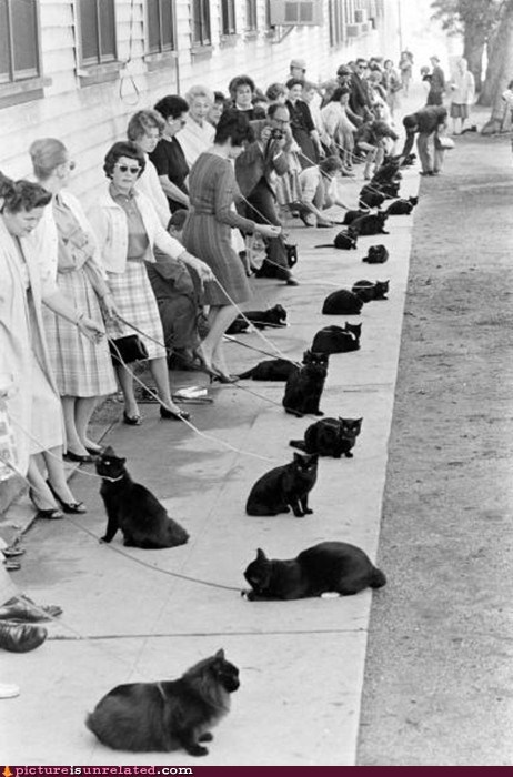black cat,convention,pets,unlucky,wtf