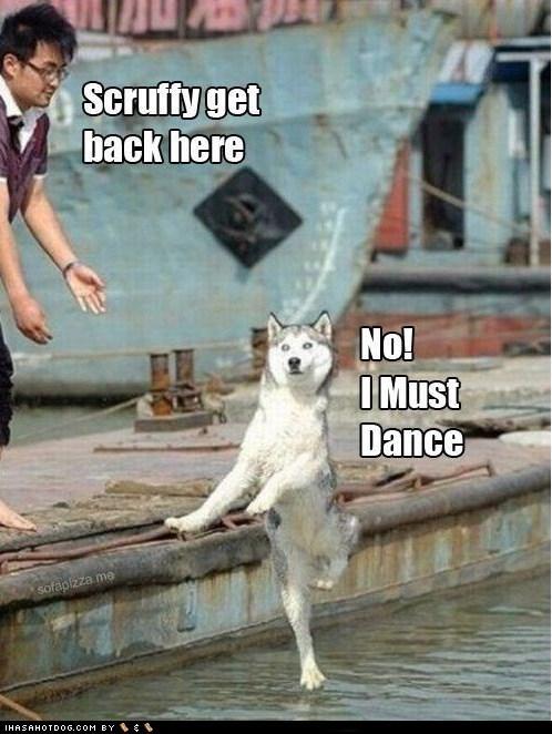 dogs funny husky meme - 5967125248