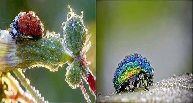 crazy insects wtf interesting cute pretty colors funny weird rainbow dash true facts - 5967365