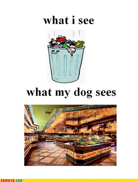 dogs the internets trash - 5967383808