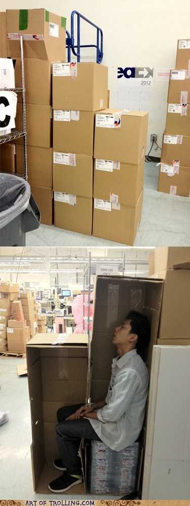 boxes,hiding,IRL,sleeping