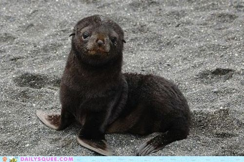 baby beach sand sea lion seal - 5967572480