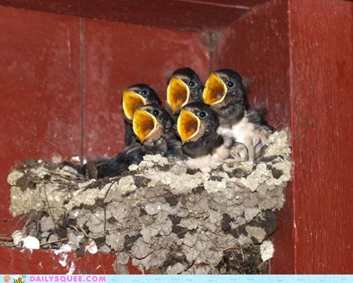 beaks birds chicks eat food nest yell - 5967577856