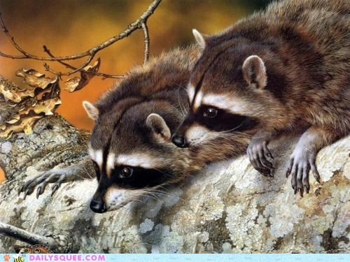 branch,curious,raccoons,squee spree,tree