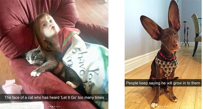 funny animal snapchats that show how clever pets are