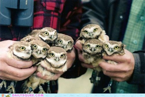 best of the week birds eyes Hall of Fame hands holding owls squee stare