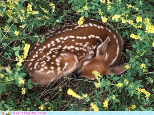 baby deer fawn flowers sleep snuggle - 5967800320