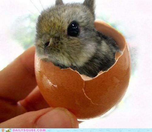 baby,best of the week,bunny,egg,eggshell,happy bunday,mystery