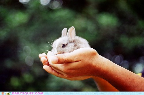 baby bunny hands happy bunday rabbit - 5967941632