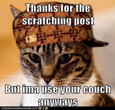 Cats,couch,destruction,mean,Memes,rude,scratch,scratching post,scumbag,Scumbag Cat