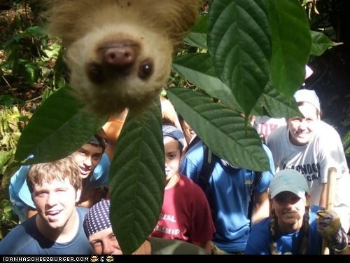 adorable,candid,Photo,photobomb,posing,sloth,squee,upside down