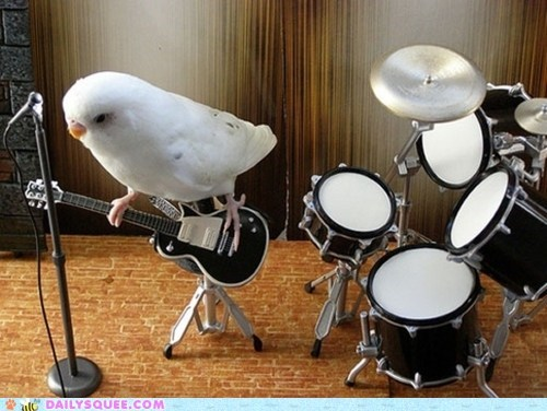 band,bird,guitar,Hall of Fame,miniature,parakeet,white