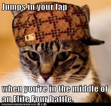 Scumbag Cat - 5968310272