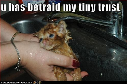 bath,bathing,best of the week,betrayed,classics,disappointed,do not want,Hall of Fame,kitten,tabby,tiny,trust,wet