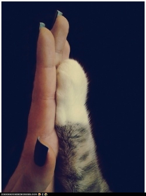 cat,friends,friendship,hand,high five,human,paw