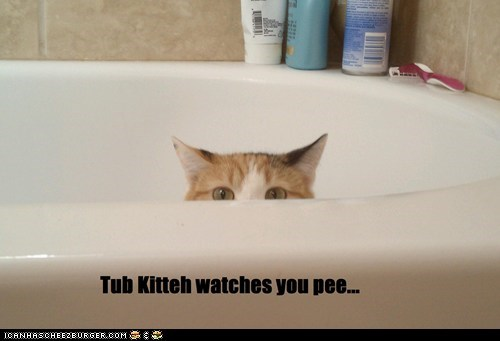 bathroom best of the week cat creepy Hall of Fame pee tub watching - 5968602624