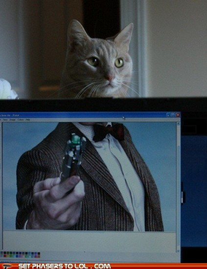 Cats,doctor who,Matt Smith,position,sonic screwdriver,the doctor