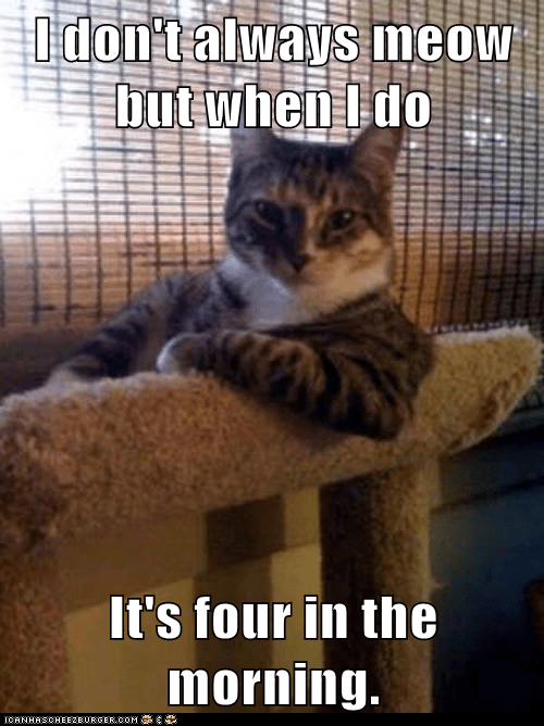 I don't always meow but when I do It's four in the morning.