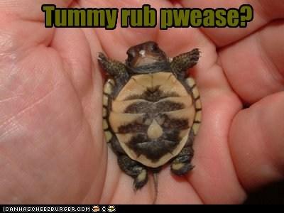 cute hand love rub small squee turtle - 5969438720