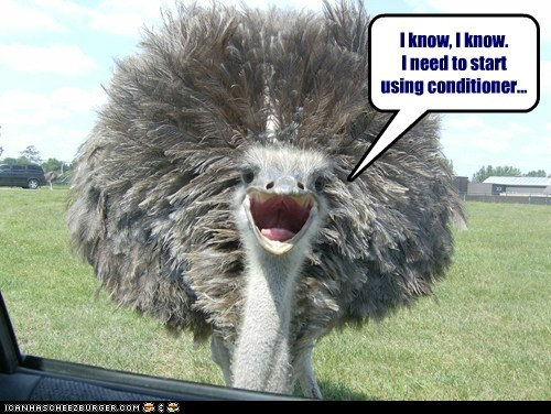 clean conditioner feathers hair hygiene ostrich shampoo - 5969473536