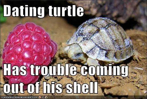bashful date love relationship shy turtle - 5969501184