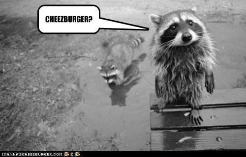 Cheezburger Image 5969556992