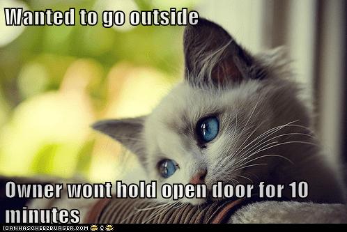 first world cat problems - 5969860096