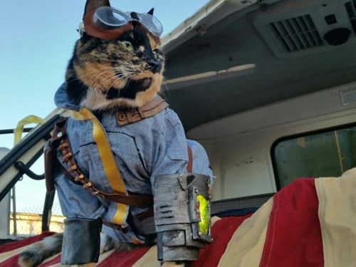 cosplay list Cats - 596997