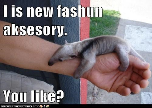 I is new fashun aksesory. You like?