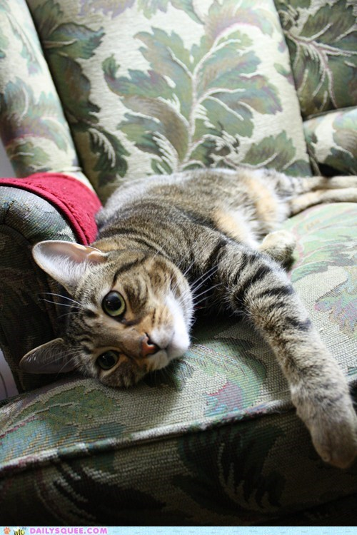 cat pet reader squees rescue tabby - 5970856960