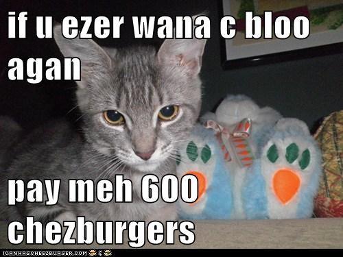 Cheezburger Image 5970906112