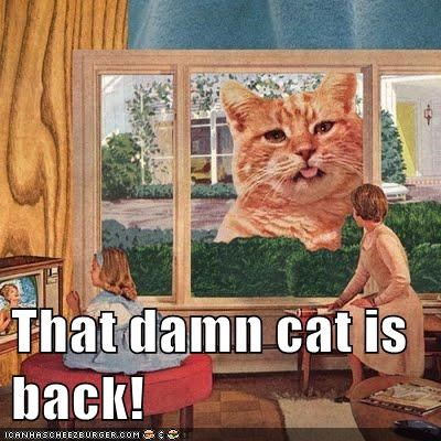 That damn cat is back!