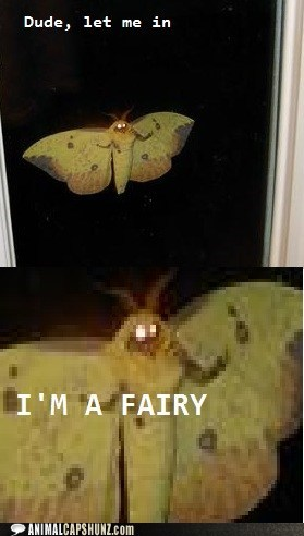 creepy fairy insect moth window wtf