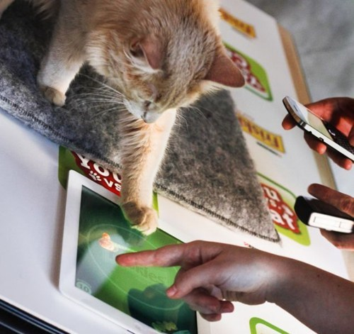 Cats friskies ipads you-vs-cat - 5971337728